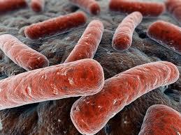 Mycobacterium Tuberculosis image