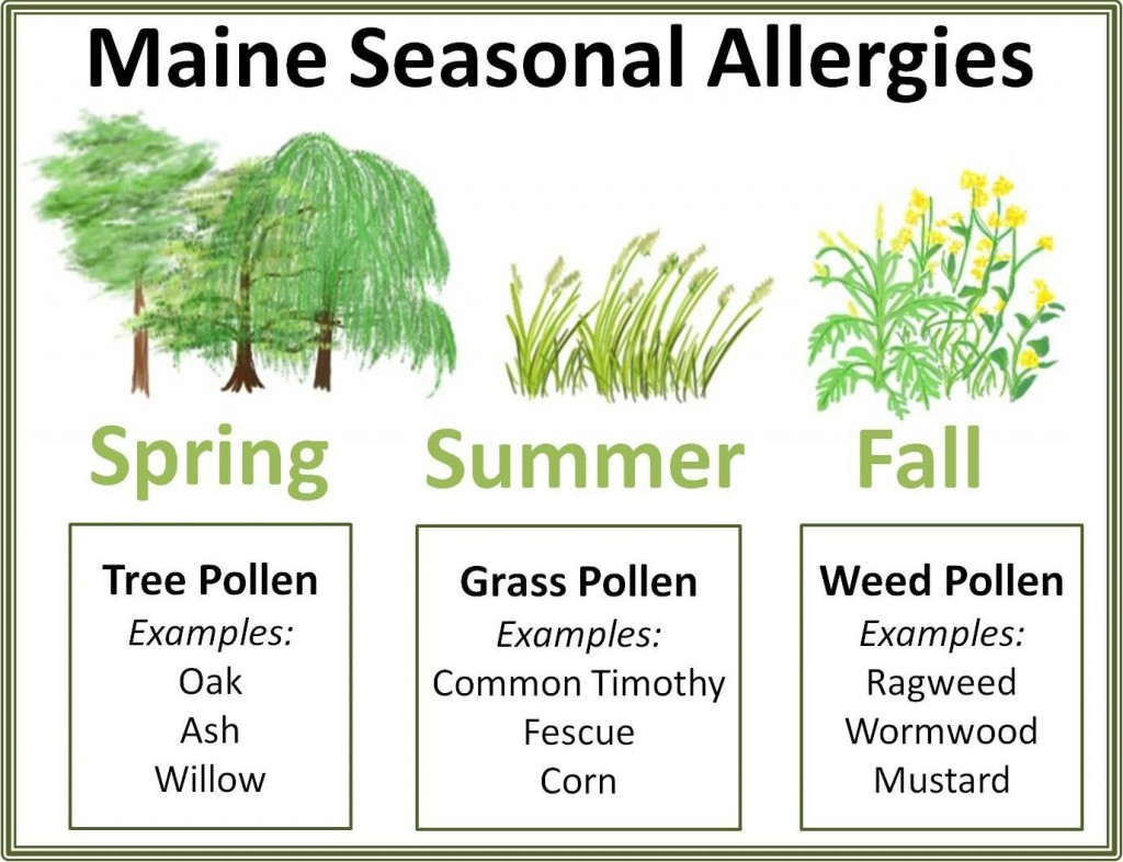 What Allergy Medicine Is Best
