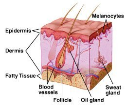 causes of moles and homeopathic treatment